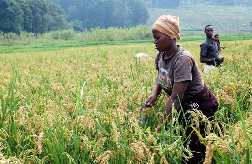 Rwanda : la croissance économique du PIB a atteint 9,4% en 2019 (NISR)