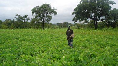 Photo of Togo : le Glyphosate officiellement interdit !