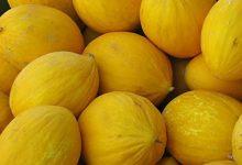 Photo of Bien-être : le Melon bienfaits et vertus pour la santé