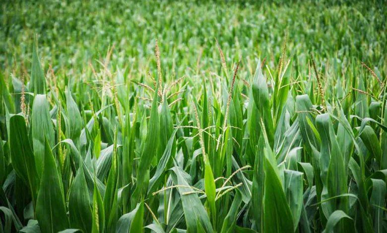 150 000 petits exploitants agricoles bénéficieront d'intrants agricoles