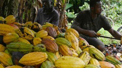 Photo of Côte d'Ivoire : vers une augmentation du montant de la prime de qualité de son cacao