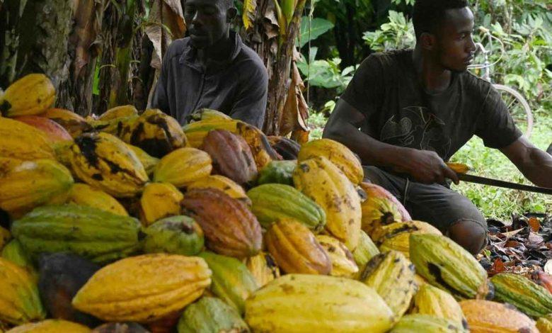 montant de la prime de qualité de son cacao