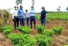Campagne agricole 2021 au Togo