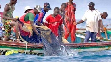 filets de pêche similaires aux moustiquaires