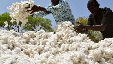 Photo of Togo : la NSCT recrute des travailleurs pour son usine de Blitta