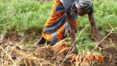 l'investissement agricole au Togo