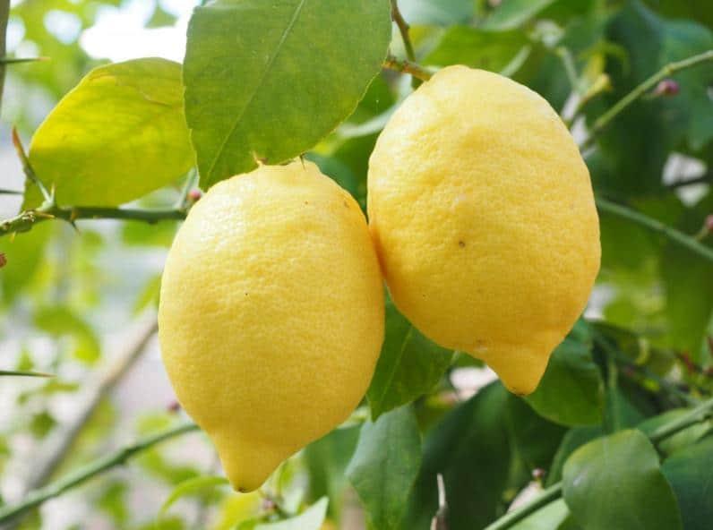 Les bienfaits du citron