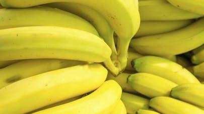 Bien qu'elle s'épanouisse sous les tropiques, la banane compte parmi les aliments de plusieurs personnes au quotidien. Riche en potassium et en glucides particuliers, elle possède diverses vertus pour la santé. Dans notre rendez-vous d'aujourd'hui vous découvrirez mieux ce merveilleux fruit sous estimé par bons nombres de personnes - Ocean's News