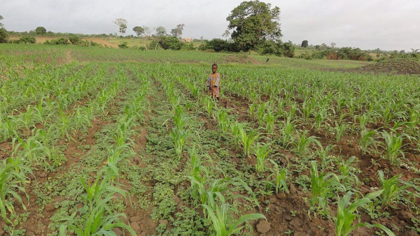 campagne agricole 2021-2022 au Togo