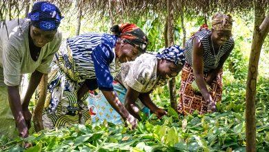 exportations agricoles du Togo