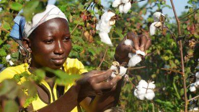 La Compagnie Malienne pour le Développement du Textile