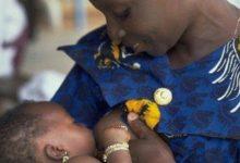 l'allaitement maternel exclusif
