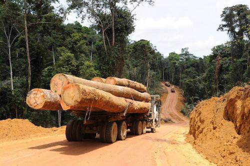 l'exportation du bois de sciage